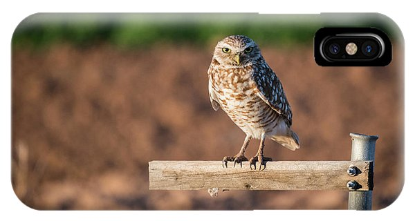 Burrowing Owl On A Perch IPhone Case