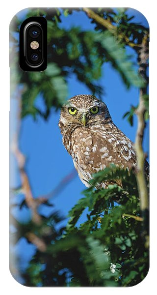 Burrowing Owl Sitting In A Tree IPhone Case