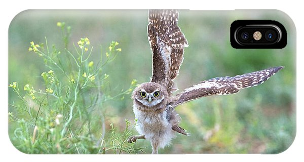 Burrowing Owl Spies Grasshopper IPhone Case