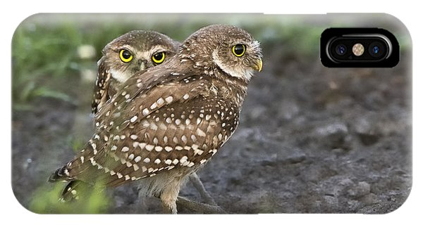Burrowing Owl Twins IPhone Case