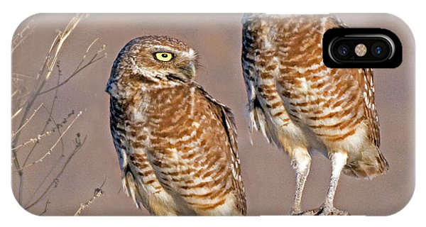 Burrowing Owls At Salton Sea IPhone Case