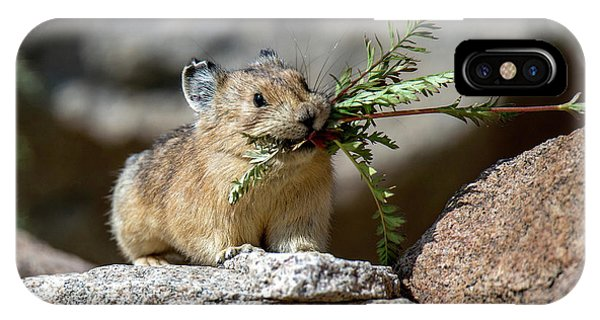 Busy As A Pika IPhone Case