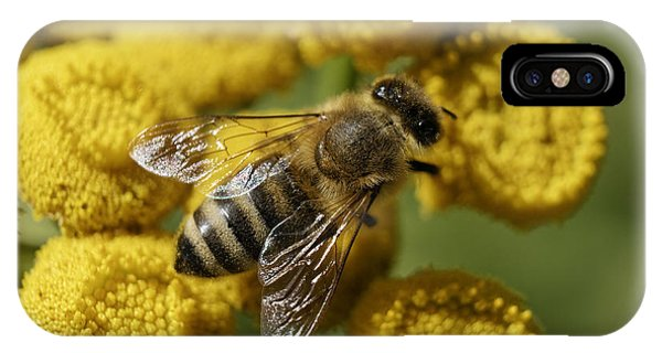 Busy Honey Bee IPhone Case
