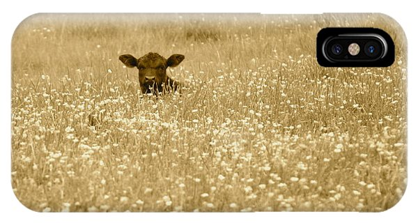 Buttercup In Sepia IPhone Case
