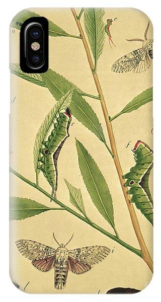 Chrysalis iPhone Case - Butterflies, Caterpillars And Plants Plate X By J Dutfield by J Dutfield