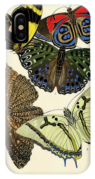 Chrysalis iPhone Case - Butterflies, Plate-12 by Painter of the 19th century