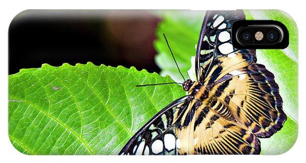 Butterfly 13a IPhone Case