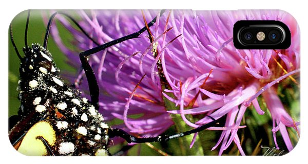 Butterfly On Bull Thistle IPhone Case