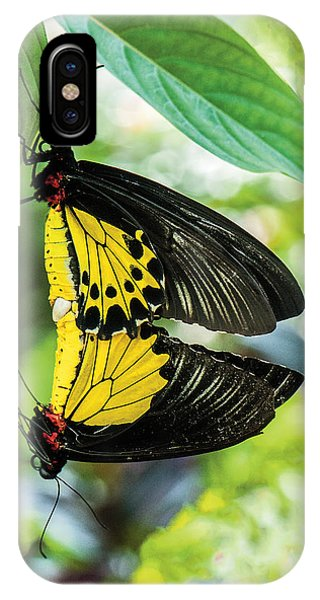 Butterfly Mating IPhone Case