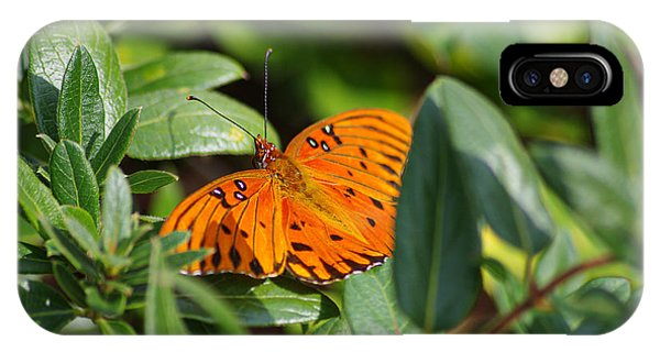 Butterfly On A Sunny Day IPhone Case