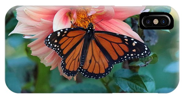 Butterfly On Dahlia IPhone Case