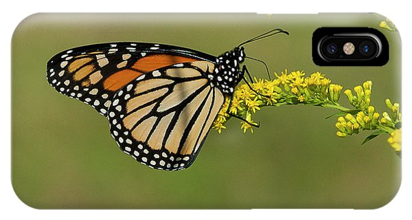 Butterfly On Flowers IPhone Case