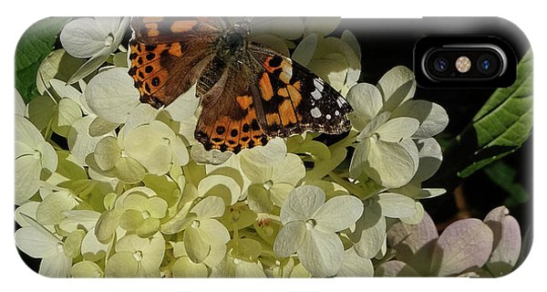Butterfly On Hydrangea IPhone Case