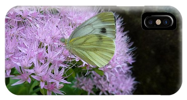 Butterfly On Mauve Flowers IPhone Case
