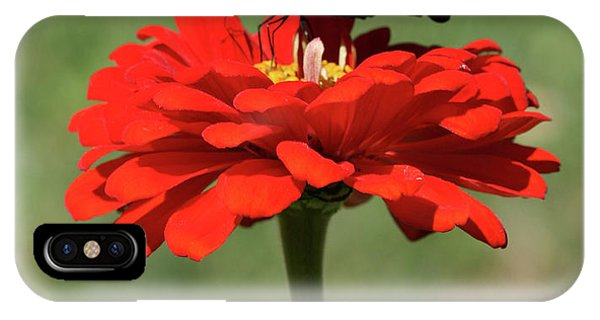 Butterfly On Red Zinnia IPhone Case