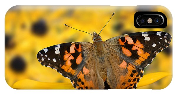 Butterfly On Rudbeckia IPhone Case