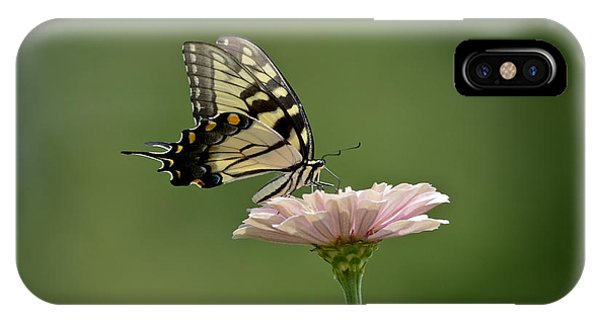Butterfly On Zinnia IPhone Case