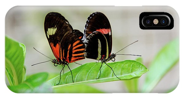 Butterfly Pair IPhone Case