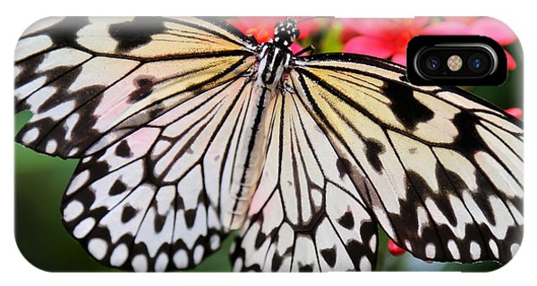 Butterfly Spectacular IPhone Case
