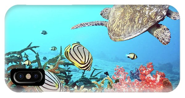 Zoology iPhone Case - Butterflyfishes And Turtle by MotHaiBaPhoto Prints