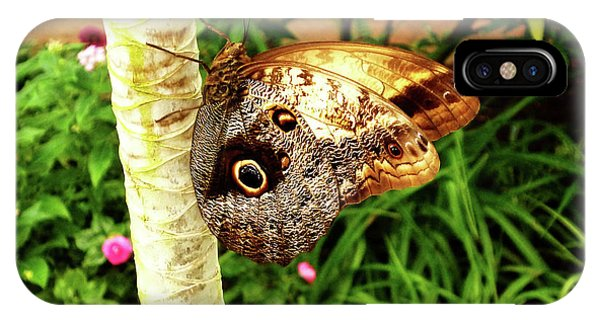 Butterfly's Eyes IPhone Case