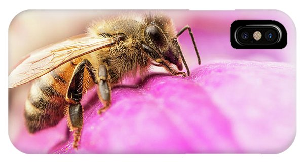 IPhone Case featuring the photograph Buzz by Bob Cournoyer