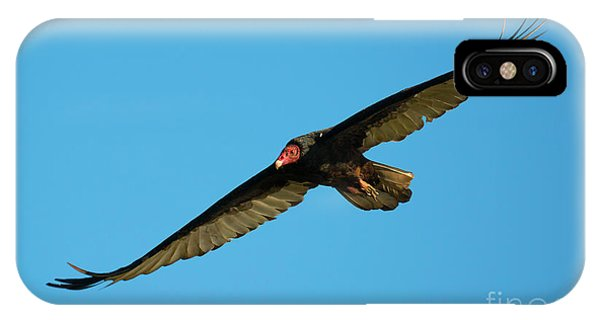 Buzzard iPhone Case - Buzzard Circling by Mike Dawson