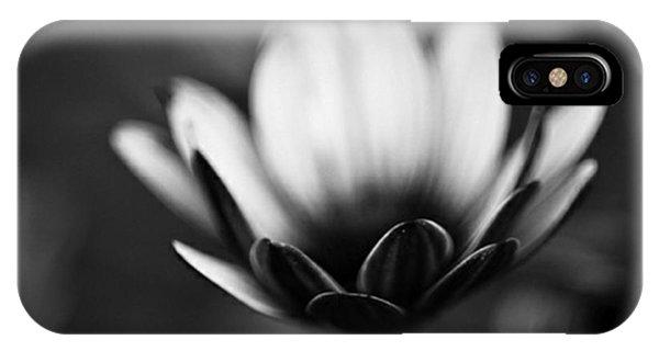 Petals iPhone Case - #bw #closeup #petals #someyearsago by Mandy Tabatt