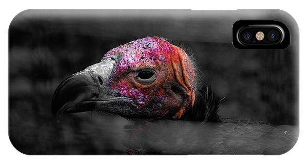 Bw Vulture - Wildlife IPhone Case
