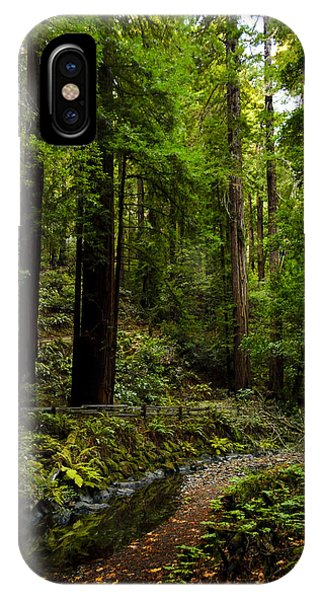 By The Stream In Muir Woods IPhone Case