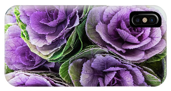 Cabbage Flower IPhone Case