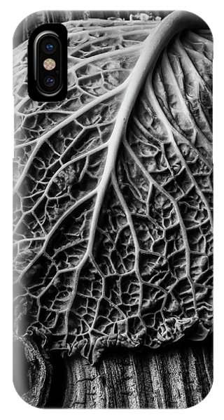 Organic Abstraction iPhone Case - Cabbage Leaf On Old Board by Garry Gay