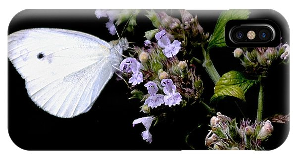 Cabbage White On Catnip IPhone Case