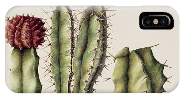 Desert iPhone Case - Cacti by Annabel Barrett
