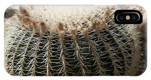 Cacti Fine Art IPhone Case