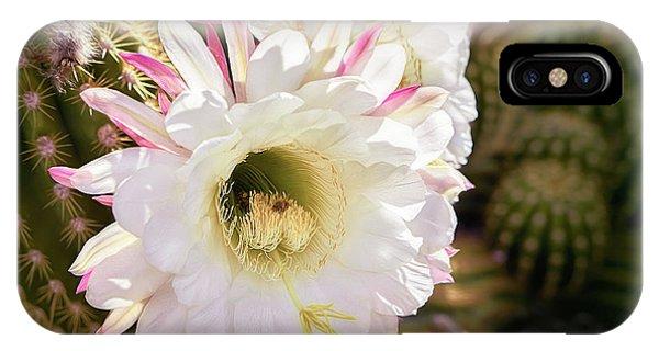 Cactus Bloom 2 IPhone Case