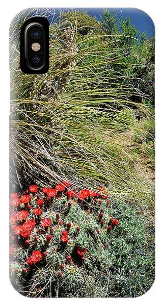 Crimson Barrel Cactus IPhone Case