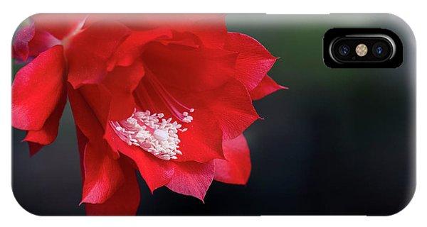 Cactus Blossom IPhone Case