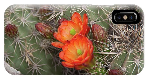 Cactus Blossoms IPhone Case
