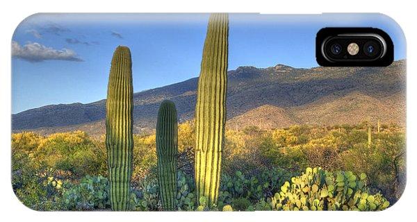 Cactus Desert Landscape IPhone Case