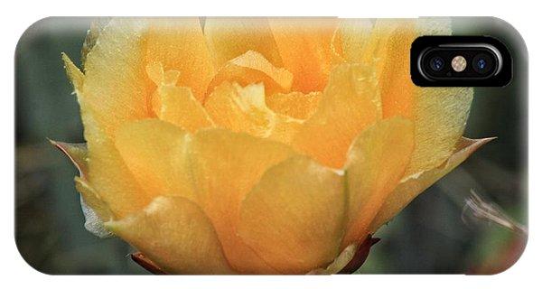 Cactus Flower 2016   IPhone Case