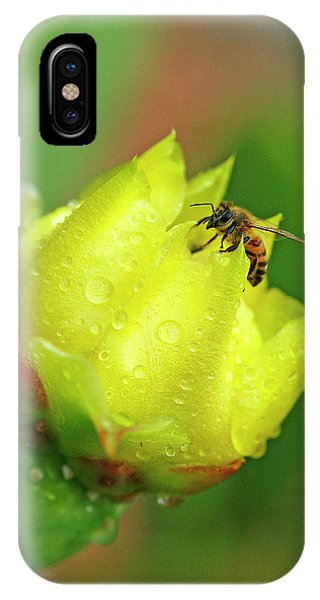 Honeybee iPhone X Case - Cactus Flower Bee by Bill Morgenstern