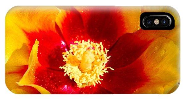 Cactus Flower V IPhone Case