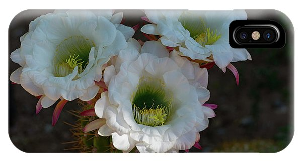 Cactus Flowers IPhone Case