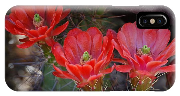 Cactus Flowers IPhone Case