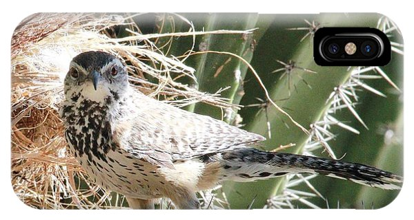 Cactus Wren 3 IPhone Case
