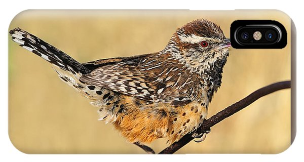 Cactus Wren IPhone Case