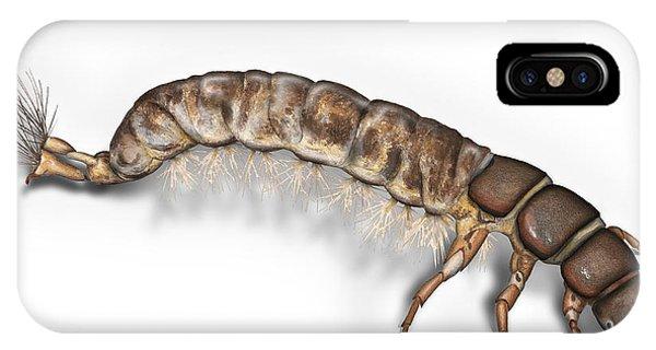 Caddisfly Larva Nymph Psychomiidae Hydropsyche Pellucidula -  IPhone Case