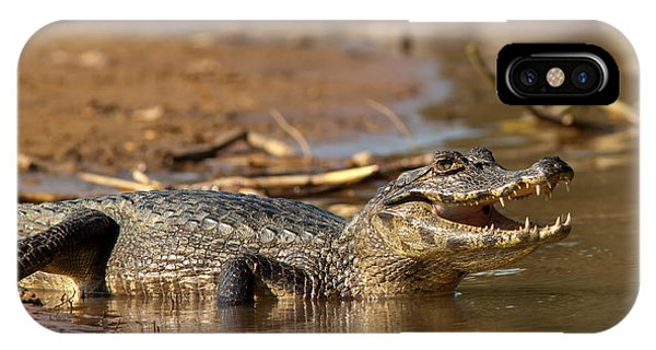 Caiman With Open Mouth IPhone Case