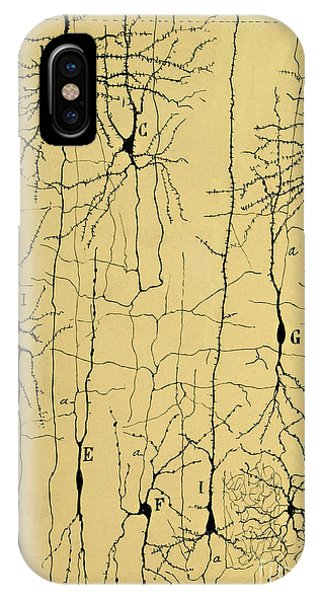 Layer iPhone Case - Cajal Drawing Of Microscopic Structure Of The Brain 1904 by Science Source